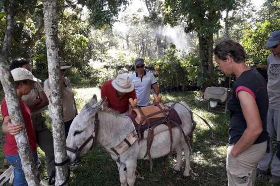 L'âne à l'honneur à Farino et à La Foa