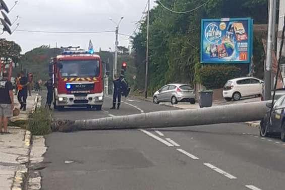Un palmier chute en pleine rue, au Faubourg-Blanchot