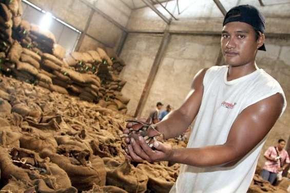 La filière cocotier polynésienne est appelée à se réinventer