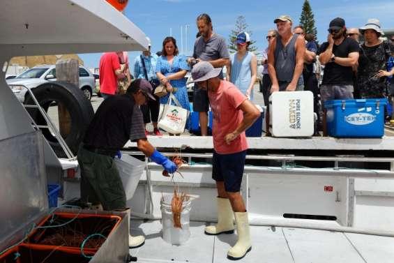 Privés du marché chinois, les pêcheurs de langoustes s'adaptent