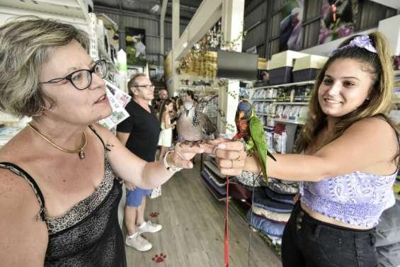 Des passionnés d'oiseaux sedonnent rendez-vous dans les rayons d'une animalerie