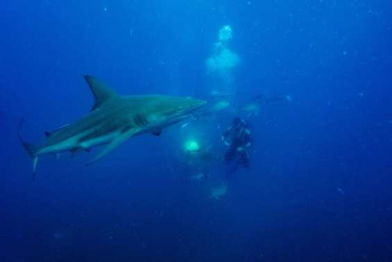 Filets anti-requins: des