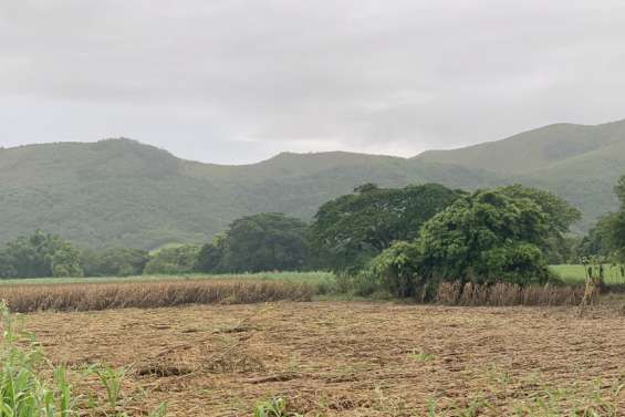 Sud : les pluies font des dégâts chez les agriculteurs et chez les éleveurs