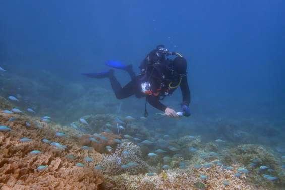 [INFOGRAPHIE] Les coraux calédoniens sont en bonne santé mais se dégradent
