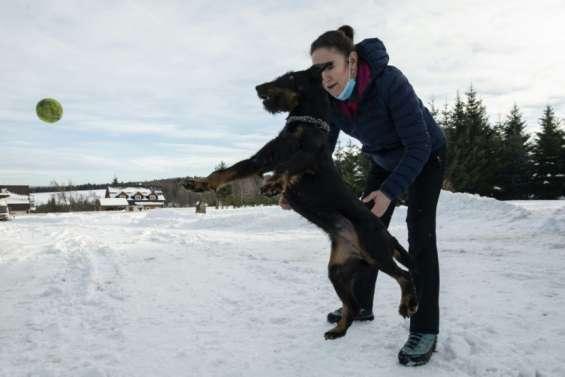 Les Tchèques préparent les chiens pour combattre le Covid-19
