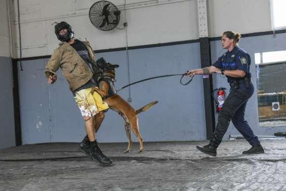 Pas de répit pour la brigade canine de Nouméa