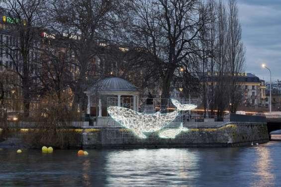 Un cétacé calédonien illumine le Lac de Genève