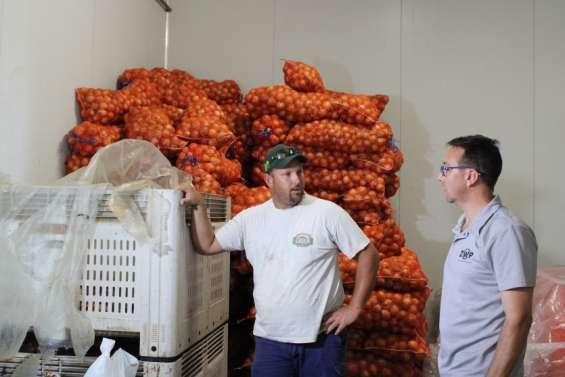 Une tonne d'oignons donnée au profit de l'aide alimentaire