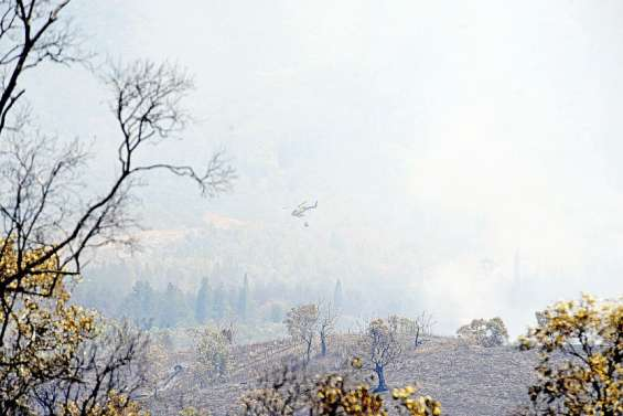 Feu de forêt : déjà 50 hectares dévastés à la tribu Bangou