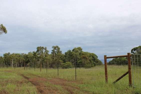 Une clôture pour protéger la forêt sèche à Pindaï