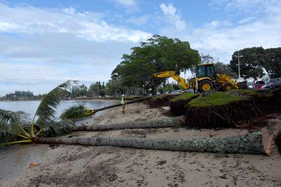 26 cocotiers condamnés par Lucas sur la plage de l'Anse-Vata