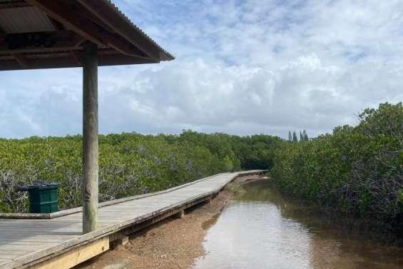 A Nouméa, l'itinéraire dédié aux modes doux se poursuit entre le parc urbain et la mangrove de Ouémo