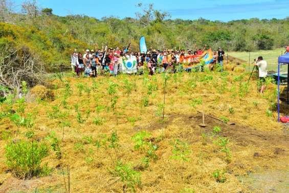 Plantation au sentier des Géants, à Déva