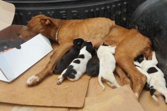 Unecampagne de stérilisation des animaux lancée dans l'Est du pays