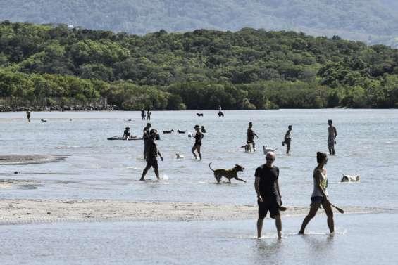 Les chiens ne sont pas toujours les bienvenus plage de Magenta