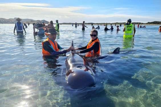 Des dizaines de dauphins-pilotes s'échouent