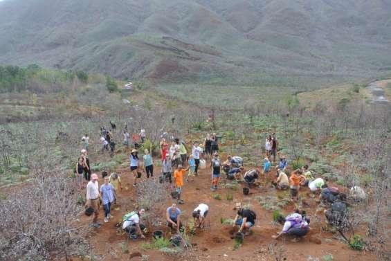 Une plantation de 2000 arbressamedi à La Coulée