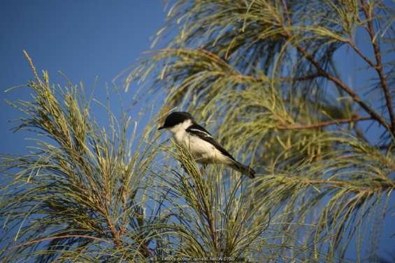 Une grande bouffée d'oxygène pour la biodiversité