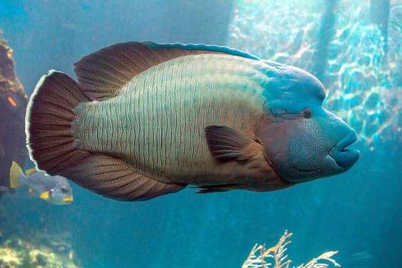 Aquarium des lagons: Léon II n'est plus