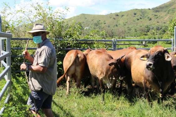 Sur les exploitations agricoles, le bon sens broussard à l'épreuvede laCovid