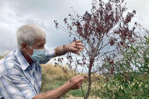 (VIDEO) Pourquoi les arbres semblent-ils mourir ?