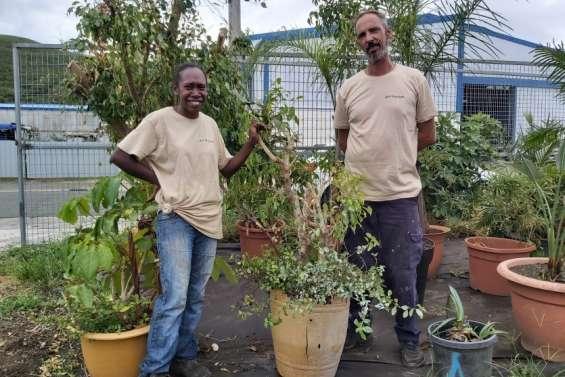 Ils sauvent les plantes dela poubelle et leur offrent une seconde vie