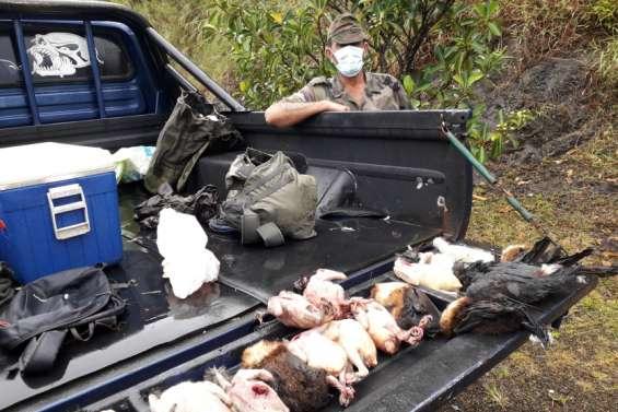 Les chasseurs ont tiré notous et roussettes ce week-end
