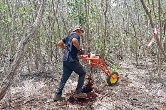 Pouembout : 5000 pieds de forêt sèche plantés sous couvert végétal