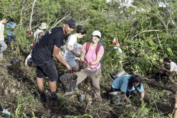 À Nouméa, Caledoclean plante 550 arbres de forêt sèche au Mont-Vénus ce matin