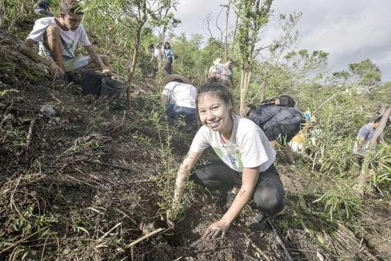 Caledoclean a planté 550 arbres de forêt sèche au Mont-Vénus samedi matin
