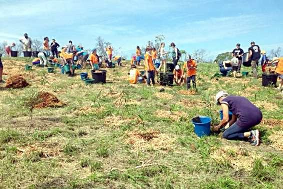 Nouméa : la Fête de la forêt bat son plein au Ouen-Toro