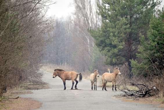 Le cheval qui redonne vie à Tchernobyl