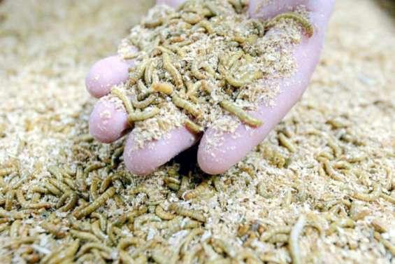 Desversde farine dans nos assiettes: le feu vert de l'UE