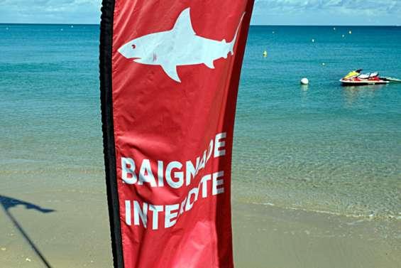 Risque requin : interdiction de baignade et d'activités nautiques à Ouano