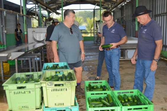 La Chambred'agriculture au chevet desproducteurs de Bourail