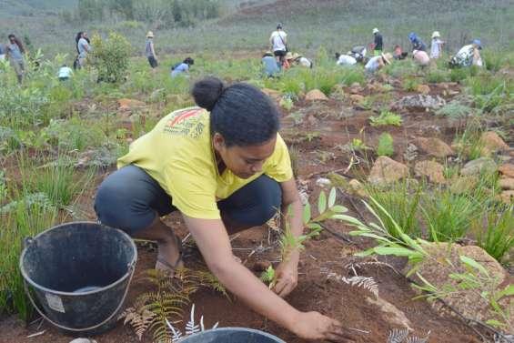 Nouvelle plantation de 2000 arbres samedi à La Coulée