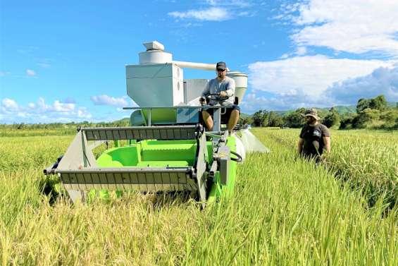 [GROS PLAN] Pourra-t-on produire un riz local?