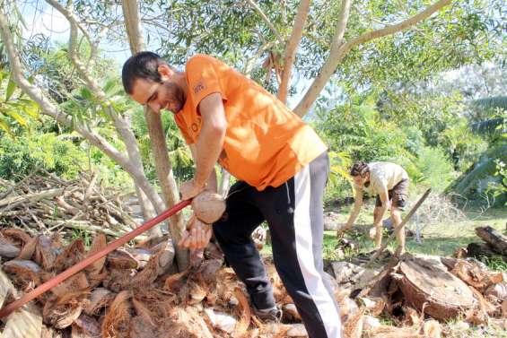 Ils collectent le surplus de noix de coco pour la bonne cause