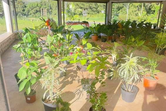 Un marché aux plantes pour la fête des Mères