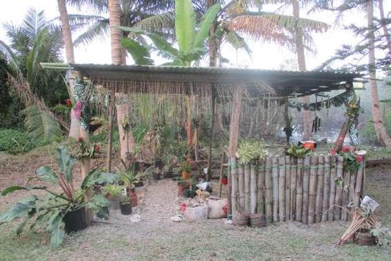 Plantes et taros à l'honneur jusqu'à dimanche à L'Embouchure