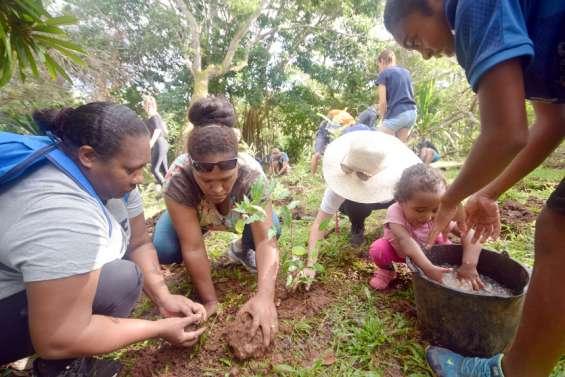 Plus de mille arbres plantéspour enrichir le chemin kanak du centre Tjibaou