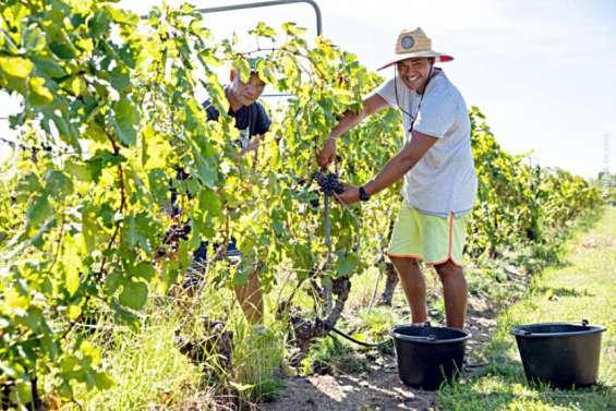 Les vins de Rangiroa récompensés
