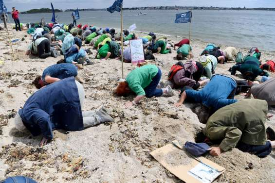 La tête dans le sable pourla lutte contre les algues vertes