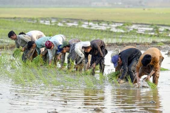 Entre l'Inde et le Pakistan, la guerre du riz basmati