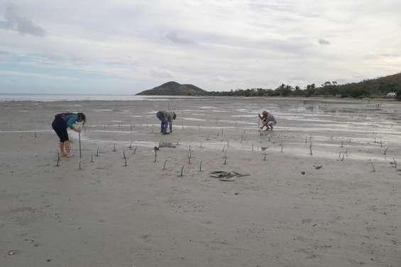 Un après-midi à restaurer la mangrove