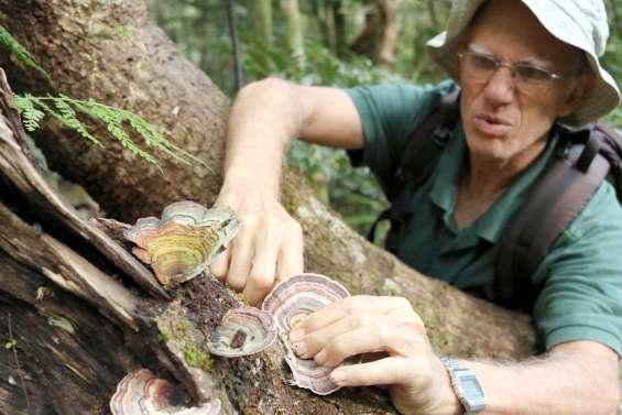 Les mycologues bénévoles révèlent les secrets des champignons du Caillou