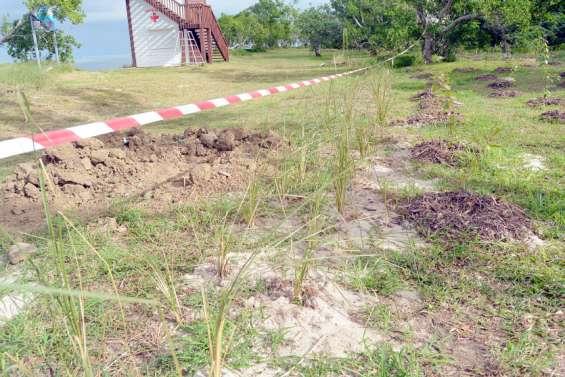 Le vétiver à l'essai pour lutter contre l'érosion du littoral de Poé