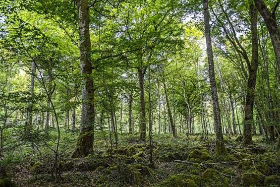 Climat: les forêts, puits de carbone