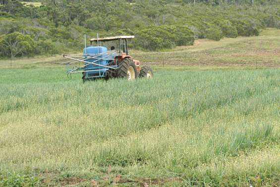 La province Sud inventorie les produits phytosanitaires non utilisés