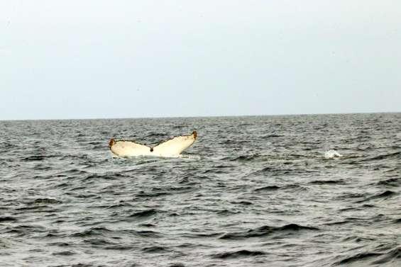 [GROS PLAN] Et les baleines pointèrent le bout de leurs nageoires
